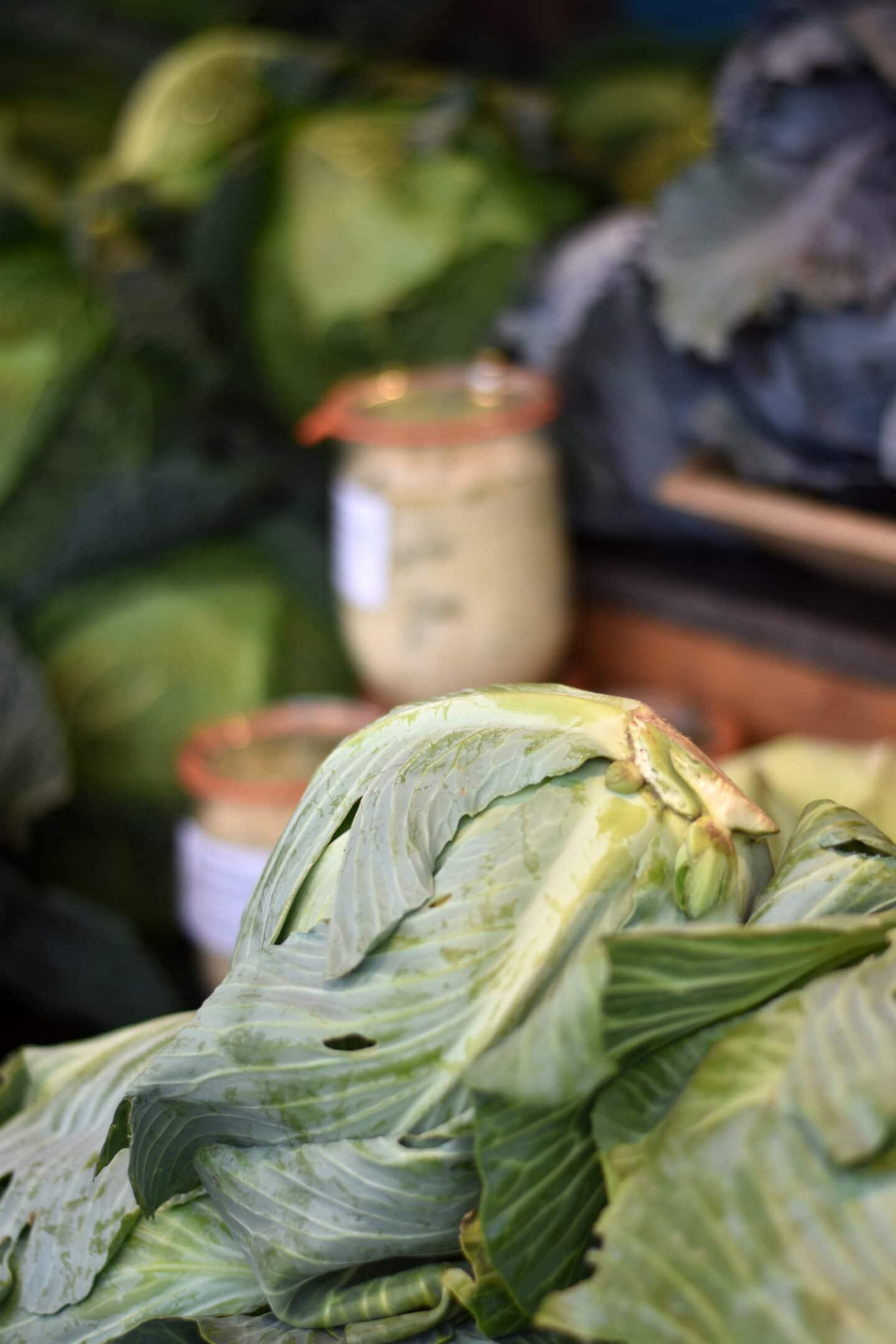 Gemüse lagern, fermentieren & haltbar machen - gesund durch den Winter